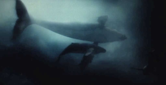 Aquaman-Easter-Egg-Man-of-Steel-Whales